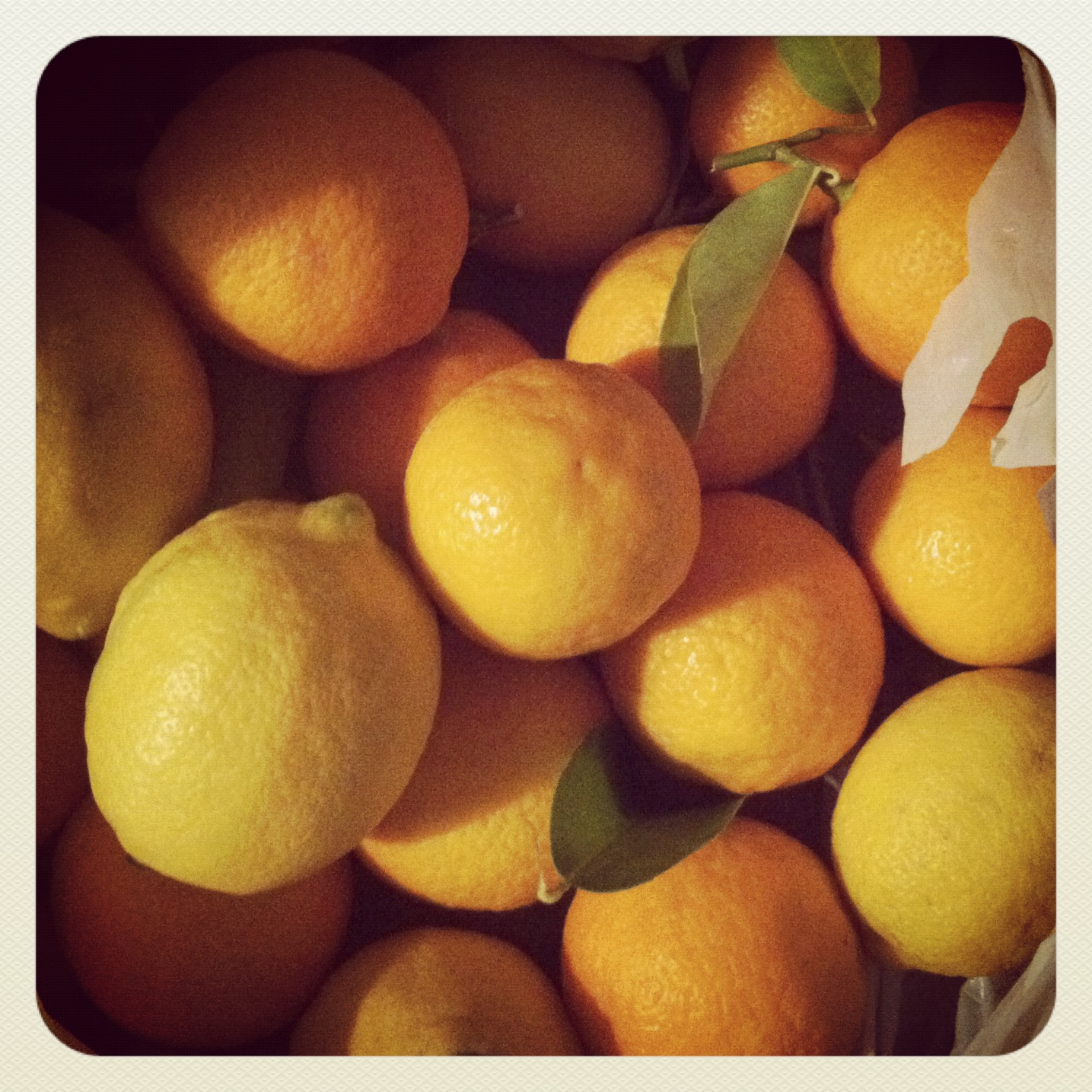 Good Golly Miss Molly: My adventures featuring Molly's Meyer lemons.