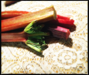 It's the time of the season for rhubarb.