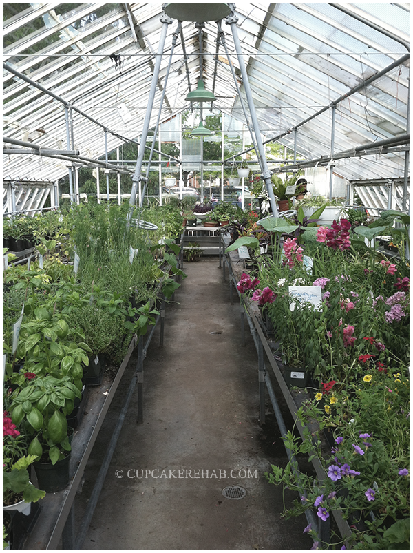 Inside the greenhouse at the Queens County Farm Museum.
