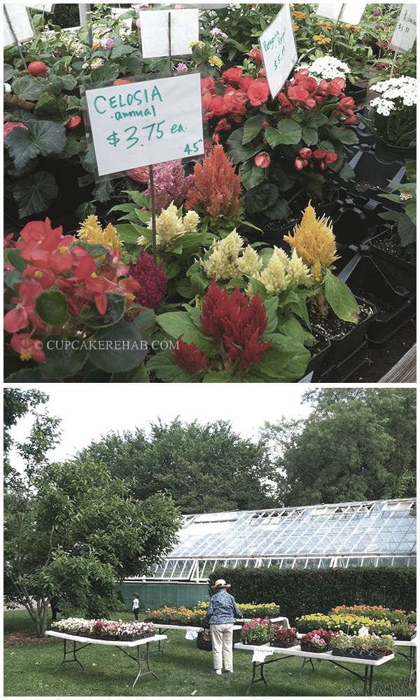 Plants for sale at the Queens County Farm Museum.