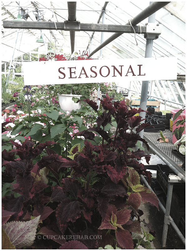 Seasonal plants for sale at the greenhouse of the Queens County Farm Museum.