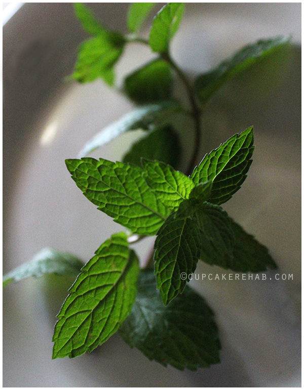 Fresh mint! Turn it into jelly in less than 15 minutes!
