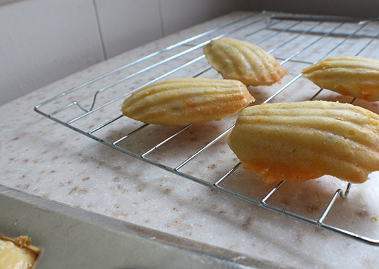 Savory cheddar, dill and onion madeleines.