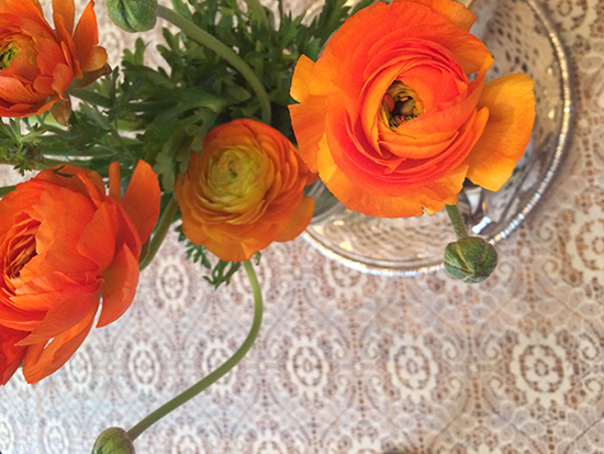 Beautiful ranunculus. Hello, spring.