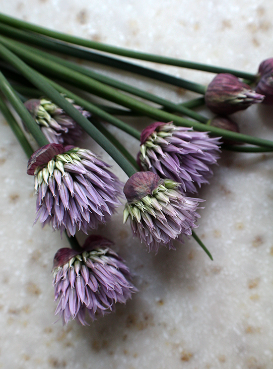 Chive blossoms!