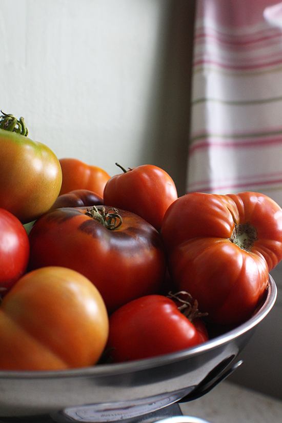 Tomatoes for fresh garden salsa.